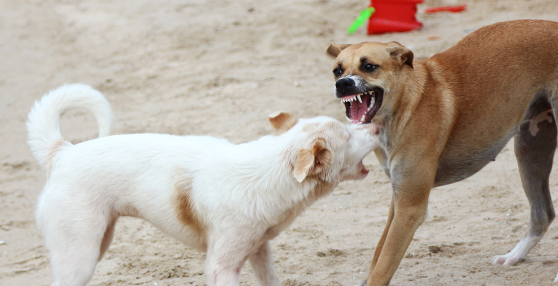 Fighting dogs